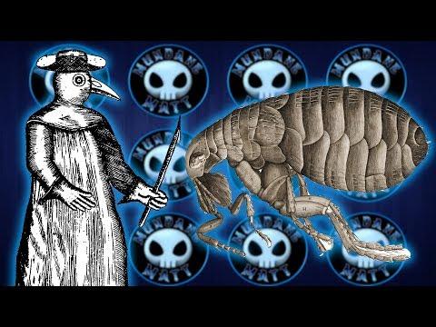 Arizona Fleas test positive for the Plague