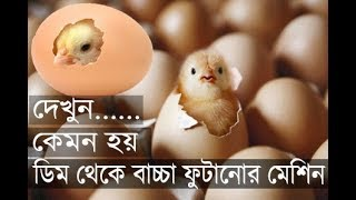 দেখুন ৬০০০ কোয়েলের ডিম থেকে বাচ্চা ফুটানোর যন্ত্র। ডেলিভারি টু ডেমরা। 6000 Egg Incubator