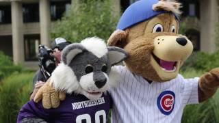 Clark the Cub, Willie the Wildcat #FlyTheW at Northwestern