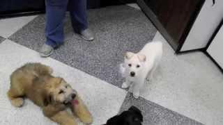 Anna At Petco/ Alaskan Noble Companion Dog