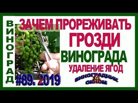 🍇 Прореживаем, проветриваем  грозди винограда. ВРЕД и ПОЛЬЗА от прореживания и удаления ягод.