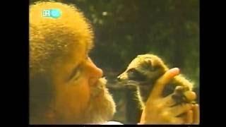 Bob Ross - Cypress Swamp (Season 25 Episode 8)
