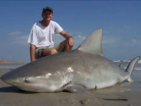 Shark fisherman 39 s first bull shark youtube for Shark fishing texas
