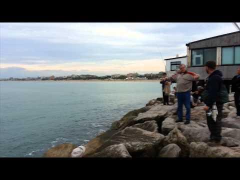 Grande leccia a Spinning al porto di Rimini