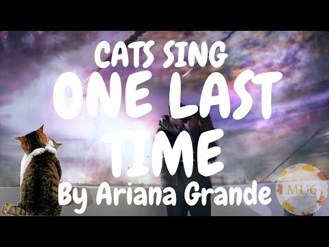 Cats Sing One Last Time by Ariana Grande | Cats Singing Song