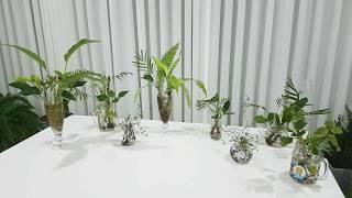 초보유튜버 식물유튜브시작 구독자 1000명 되고 싶어요…