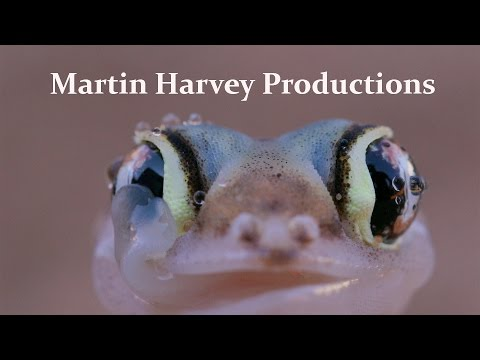 Martin Harvey Productions - this is what we do