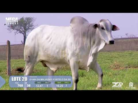 LOTE 20