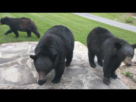 The Bear Family paid us their first visit this year