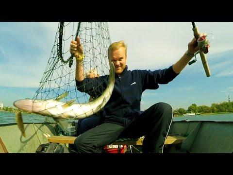 Крупный судак на живца. Ловля в черте Киева. Быстрая разделка рыбы