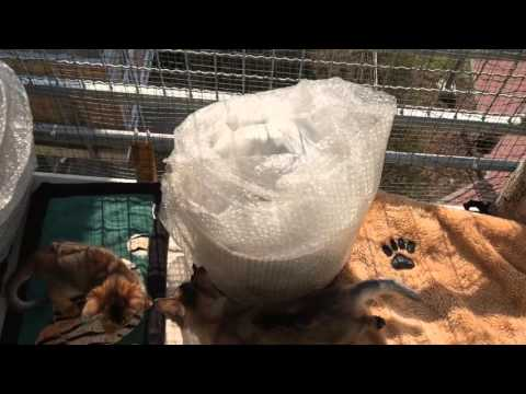 Somali kittens - first spring days on the balcony