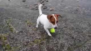 川の土手で一人ボール遊びを覚えるまで。 http://www.jacktamao.net Jac...