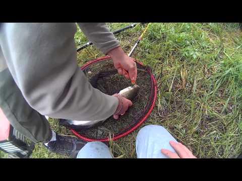 Pêche Au Coup 5 : Mulets Et Grosse Brème à L'asticot HD