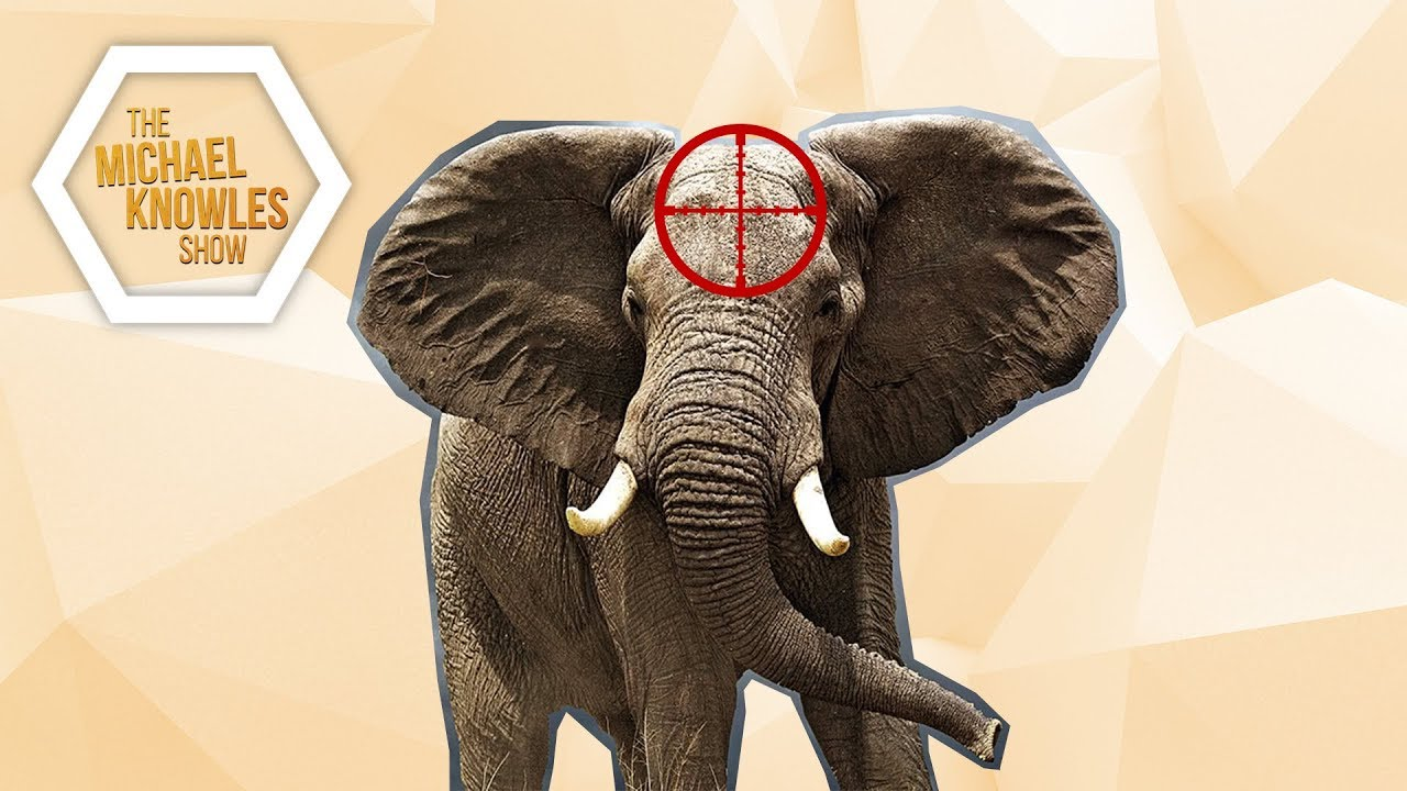 shoting an elephant Shooting an elephant audience subject occasion by george orwell why description this narrative is a prime example of descriptive writing to engage the readers.