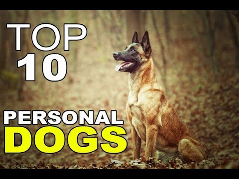 Top 10 Best Personal Protection Dog Breeds