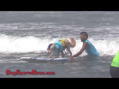 2016 Surf Dog Imperial Beach | Part 1 - Heats