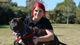 Leroy: That's A Dog! For Adoption Rspca Wacol  (id 841163)