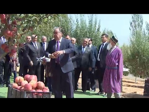 Рахмон оценил перспективы аграрных хозяйств Таджикистана