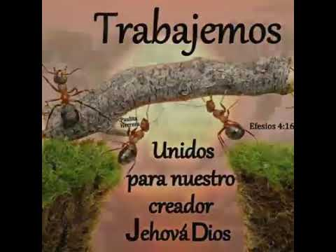 Frases Bonitas Para Los Testigos De Jehová Youtube