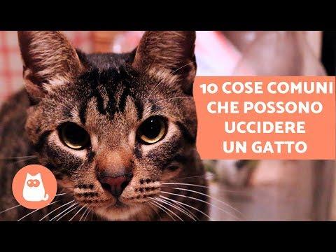 10 cose comuni che possono uccidere un gatto