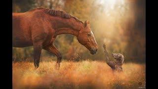 Дружба и игра лошадей и собак