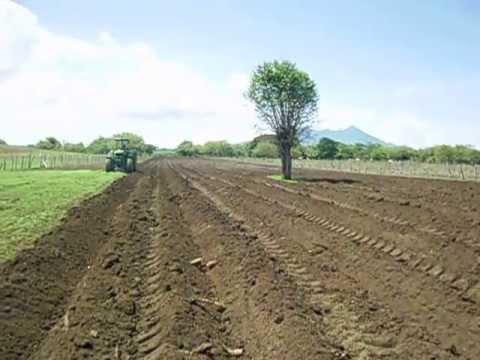 Preparacion de la tierra para platano youtube - Preparacion de la tierra para sembrar ...