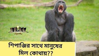শিপাঞ্জির সাথে মানুষের মিল কোথায়?? informative era with ayasha