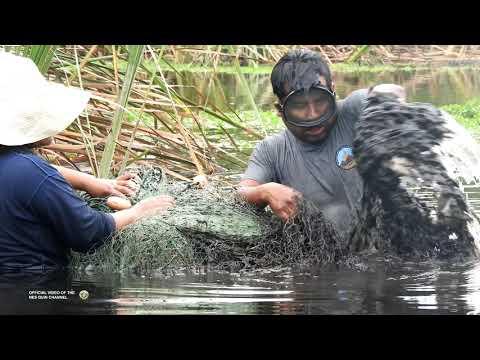 Amazing !, Look what this man caught of DANGEROUS Lagoons - Fishing big #tilapias