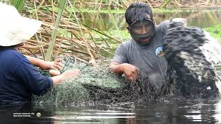 ¡ASOMBROSO!, Mira lo que PESCO este HOMBRE de Lagunas PELIGROSAS - Pesca de #TILAPIAS GRANDES