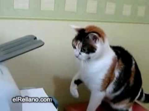 how to cure ringworm in cats