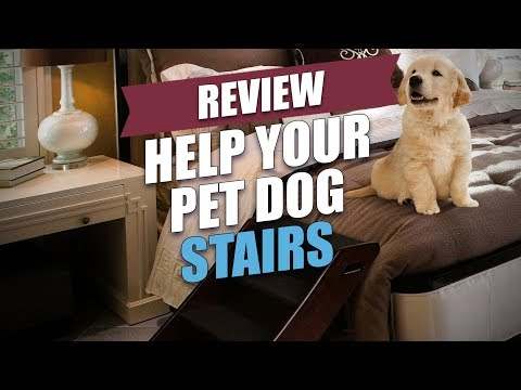 help-your-pet-dog-stairs-review-(2018)