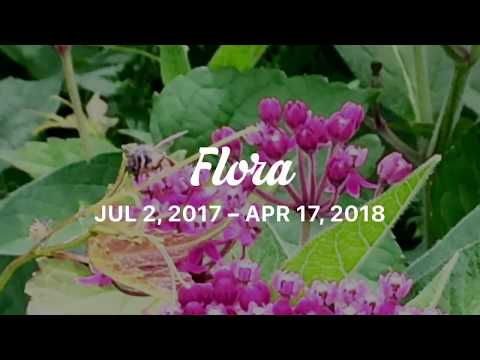 Flora of the world: Photography slideshow