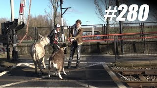 #280: Dieren Verhuizen met OV [OPDRACHT]