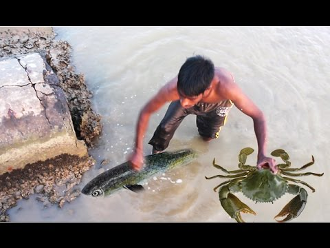 Net Fishing and Find Mud Crabs - Kadal Tv