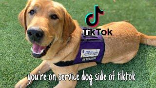 you're on service dog side of tiktok!