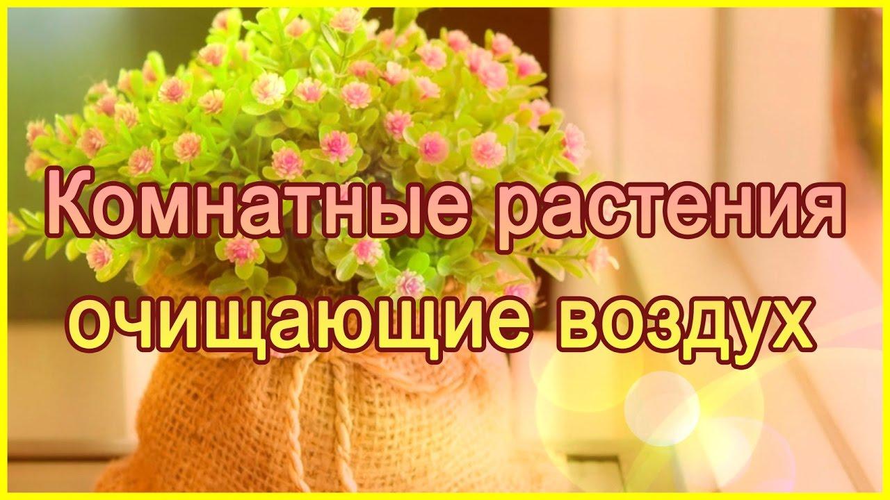 Цветы с фото которые должны быть дома обязательно