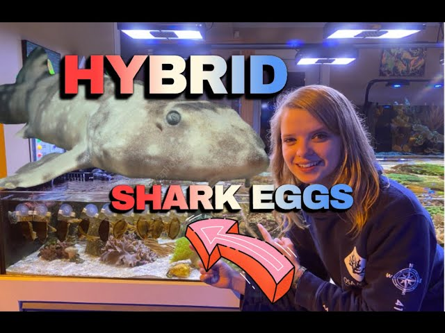 SHARK EGGS IN our Lagoon !!!! (crazy cool!) 😎