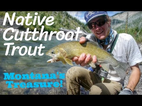 Blackfoot River: North Fork Backcountry Fly Fishing