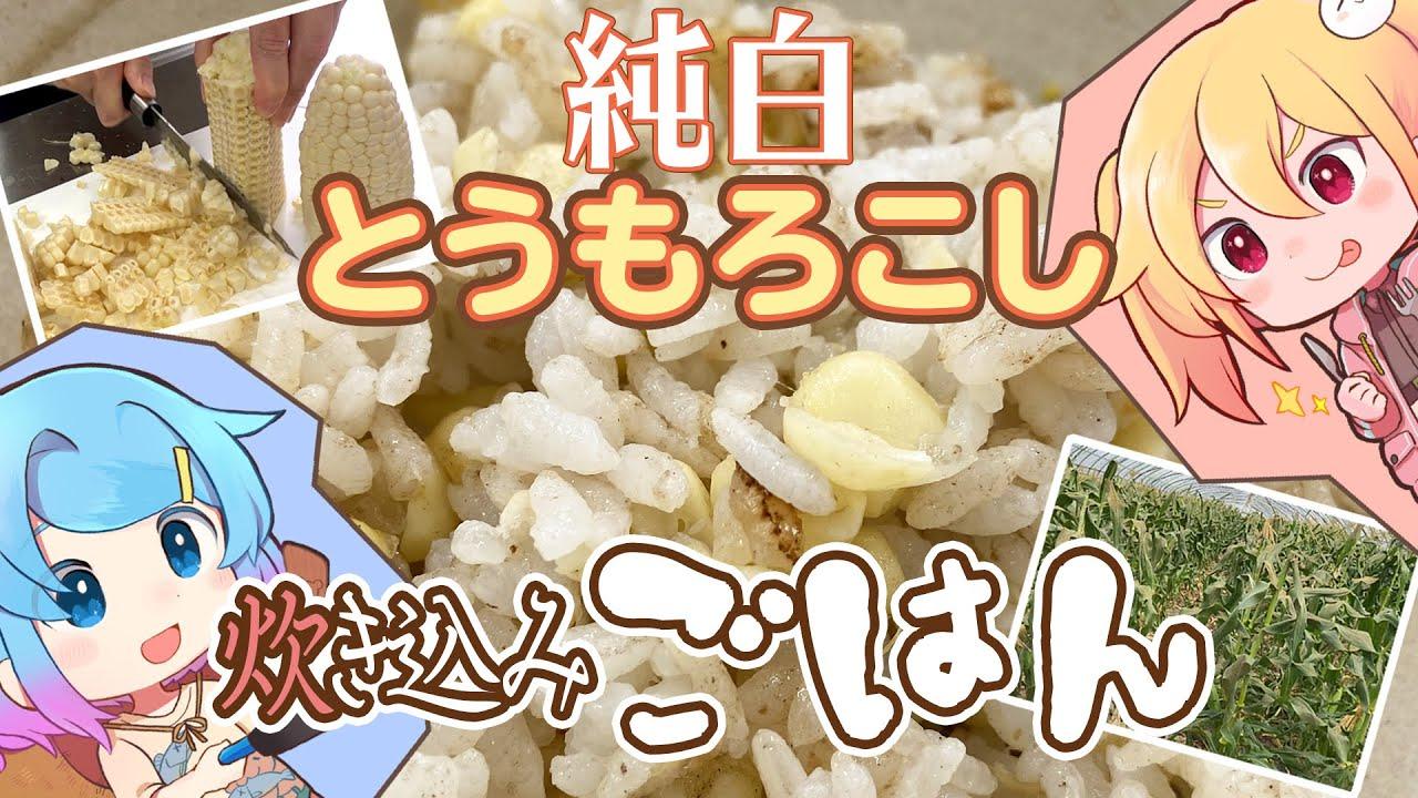 【炊き込みご飯】純白のトウモロコシ、ピュアホワイトとご飯を炊きました