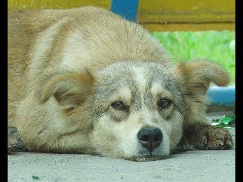 В Сызрани хотят создать питомник за бездомных собак и кошек