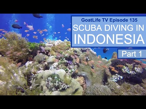 Diving In Alor: Perfect Visibility & Amazing Coral Reefs
