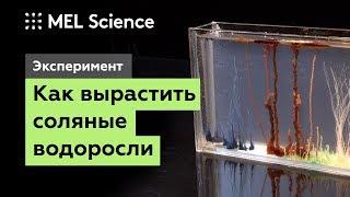 Эксперимент «Химический сад»