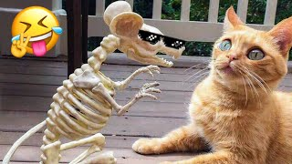 🤣 Weekly Funny Dogs and Cats 😼🐶 Try to NOT Laugh ❗