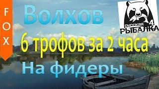 Трофеи на Волхове, на фидеры. Русская Рыбалка 4