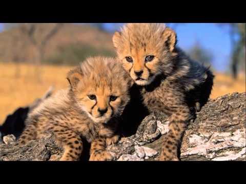 ♥♫ ♥Jambo Bwana - African music Beautiful World Africa  ♥♫ ♥