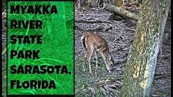 MYAKKA RIVER STATE PARK // NOV. 12, 2016 // PART 1