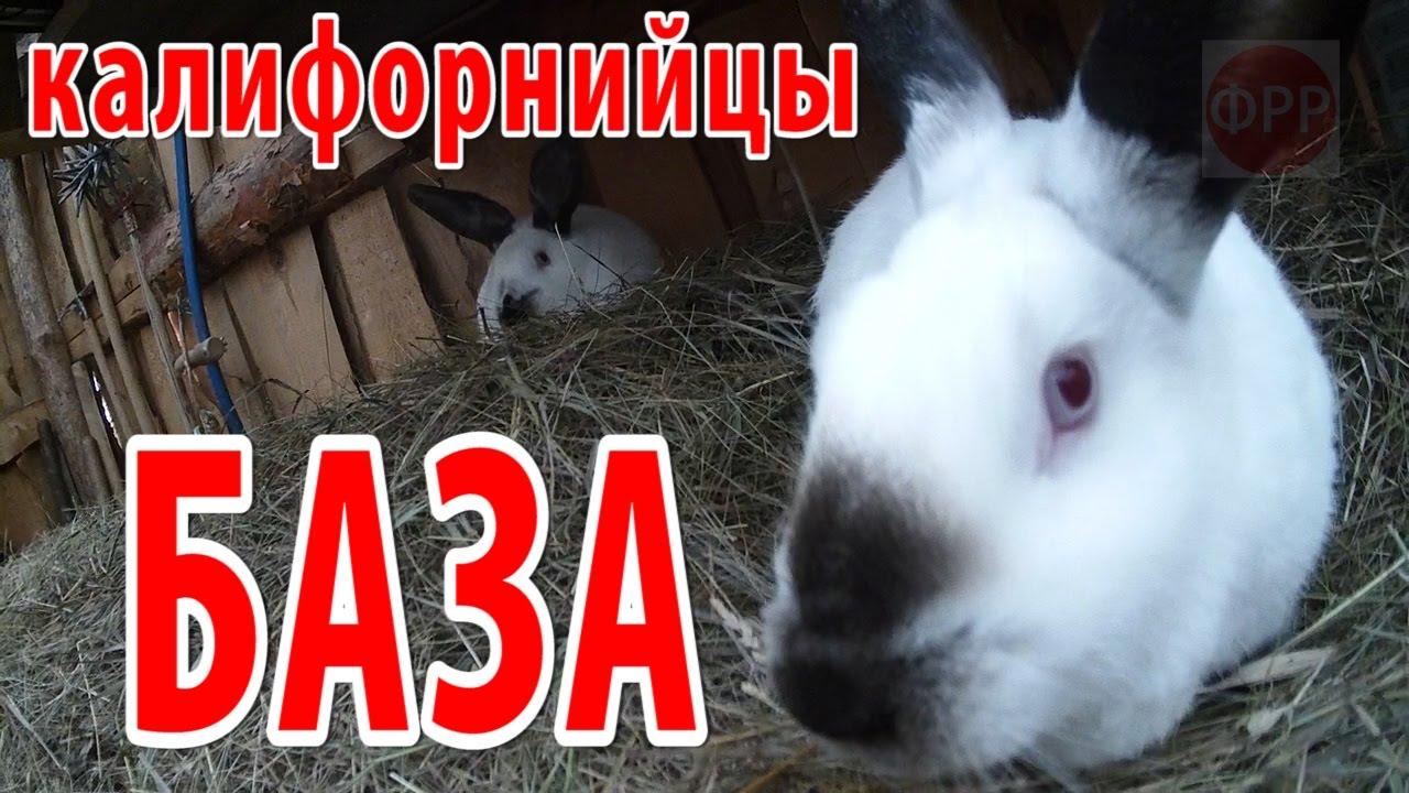 Мясные кролики — отсаженные молодые самцы (2- 2,5 мес) в вольере .