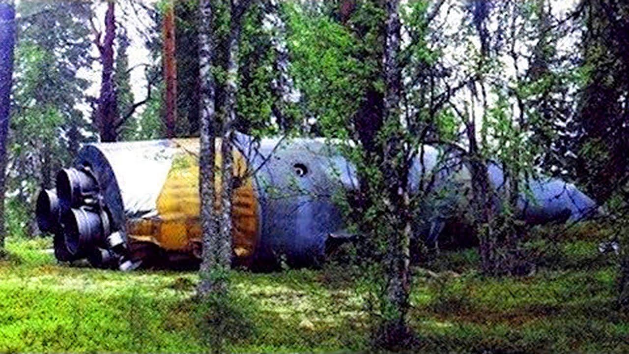 森の中での最も驚くべき発見 TOP6!