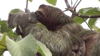 35 Animals of Costa Rica