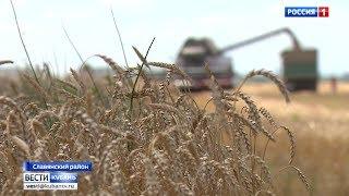 Битва за урожай разворачивается на полях Краснодарского края